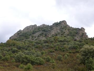 Ejemplo de Bosque Mediterraneo