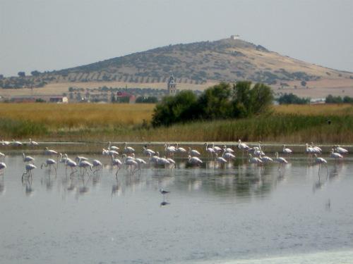 Imagen 12950 perteneciente a Reservas Naturales