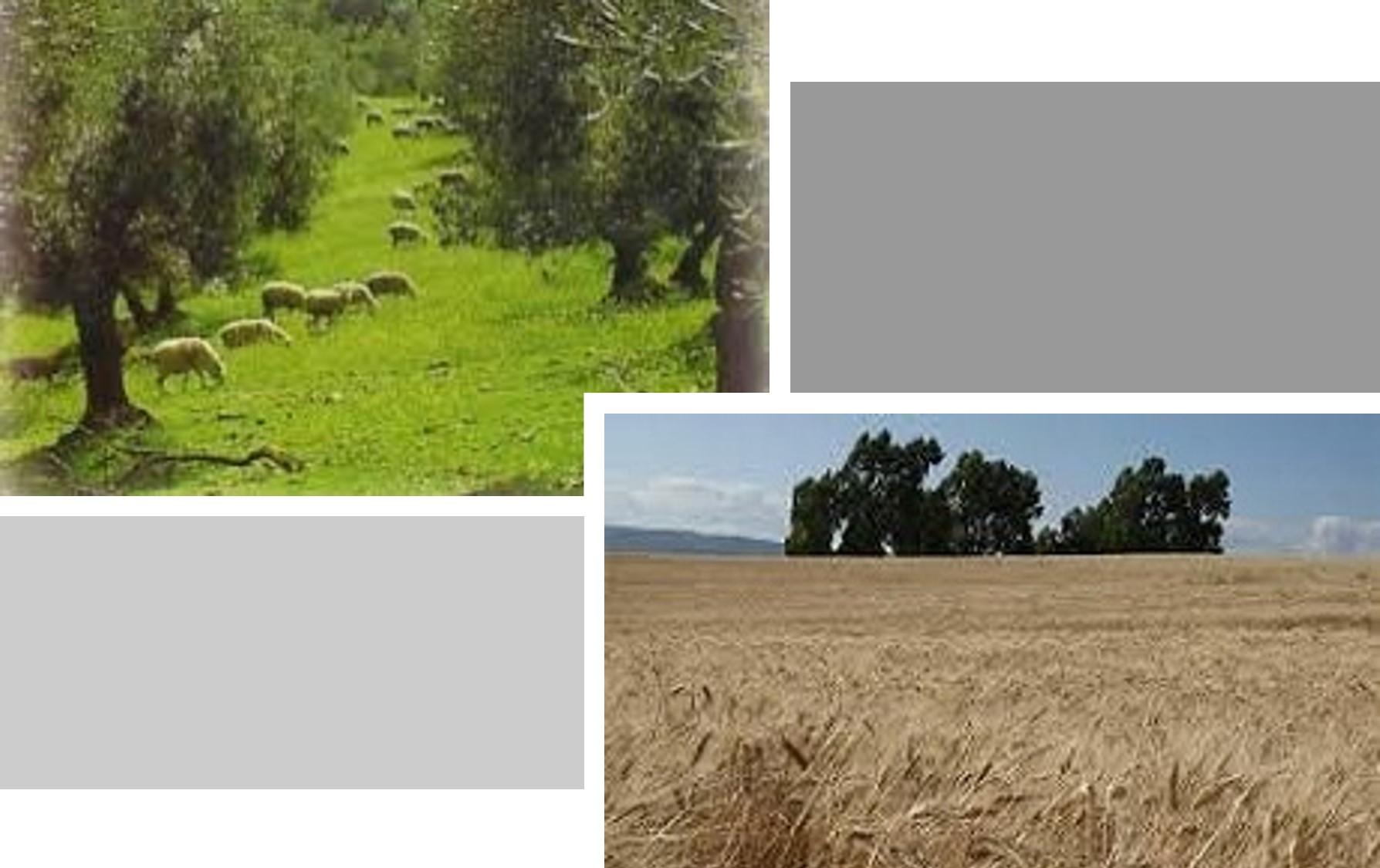 Paisajes agrícolas y ganaderos