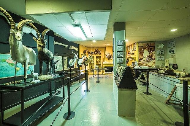 Museo de la Caza y la Naturaleza
