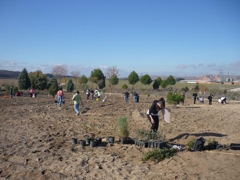 Plantación participativa