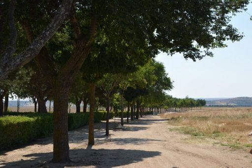 Paraje de la Romería de San Marcos