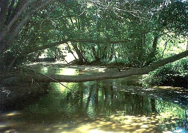 Río Alberche (a)