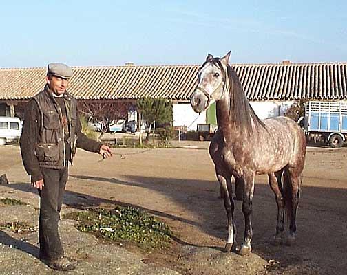 Entorno paisajístico, finca de El Castañar, caballo