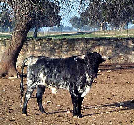 Entorno paisajístico, finca de El Castañar, ganadería (b)