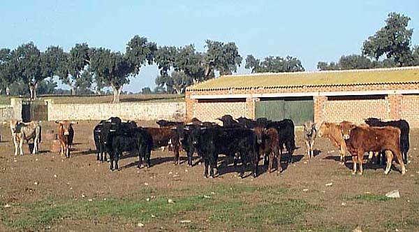 Entorno paisajístico, finca de El Castañar, ganadería reata