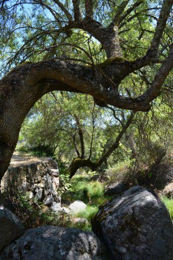 Naturaleza, enclave