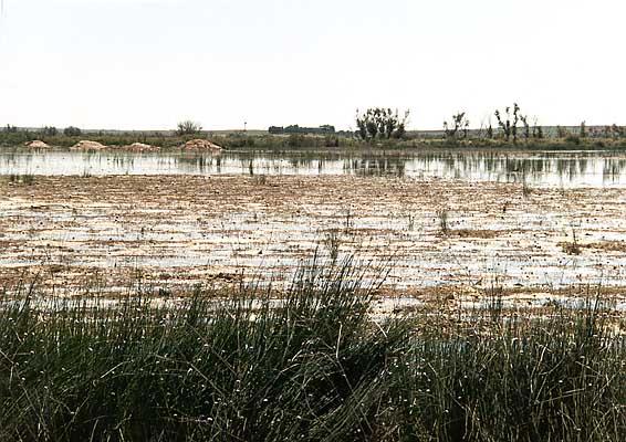 Lago de la Sal (a)