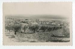 Marjaliza. Vista panorámica entre olivos. 1959 (P-495)