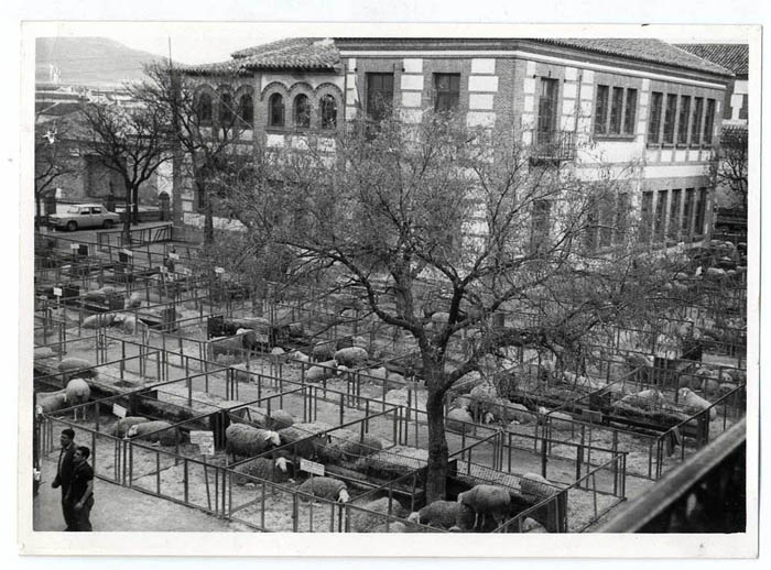 Mora. Concurso-exposición de ganado ovino. 1968 (P-1310)