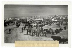Menasalbas. Mercado de ganado. 1959 (P-2706)