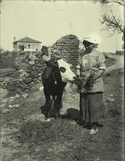 e.-Joven alimentando al ganado