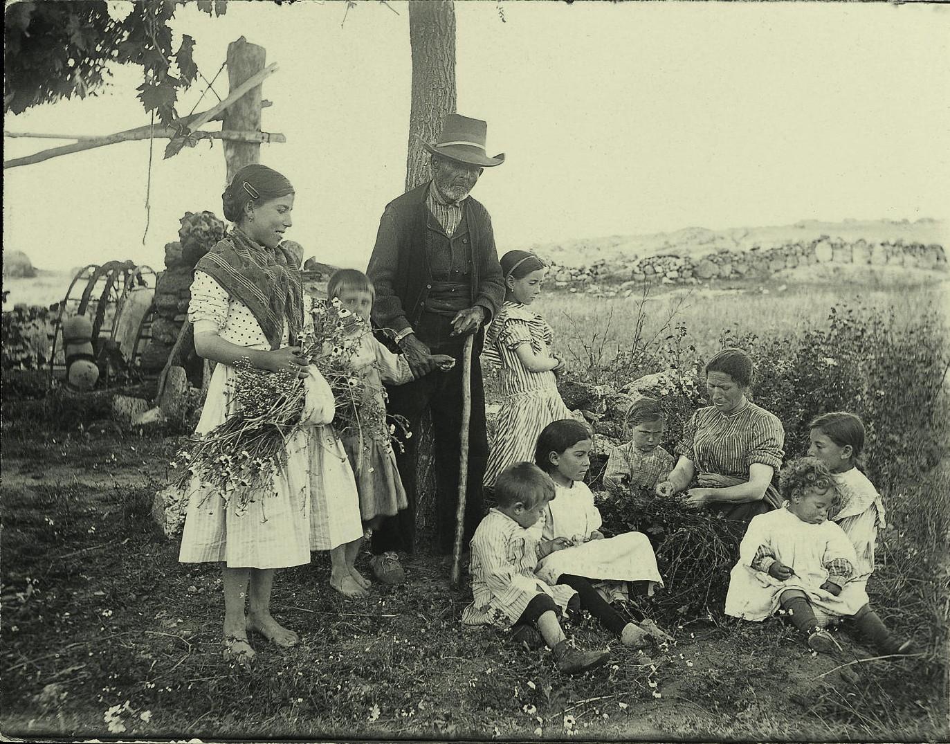 b.- Un grupo de gente recolectando flores de malva