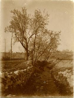 j.-Camino con árboles