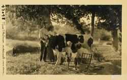 43098-Tipos toledanos ordeñando una vaca