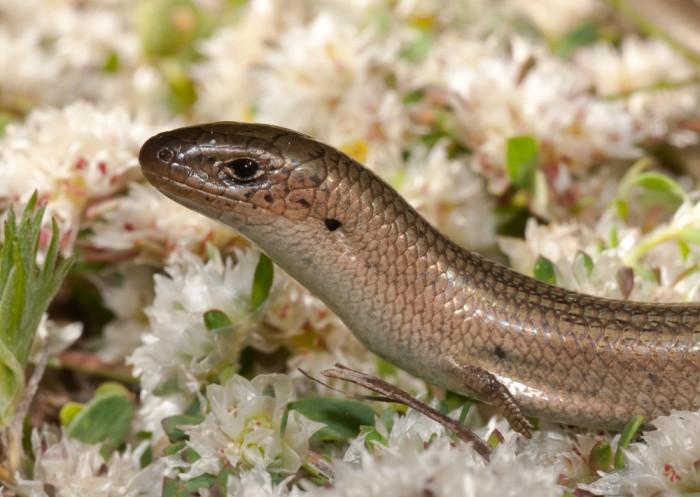Imagen de reptil estudiado en el curso