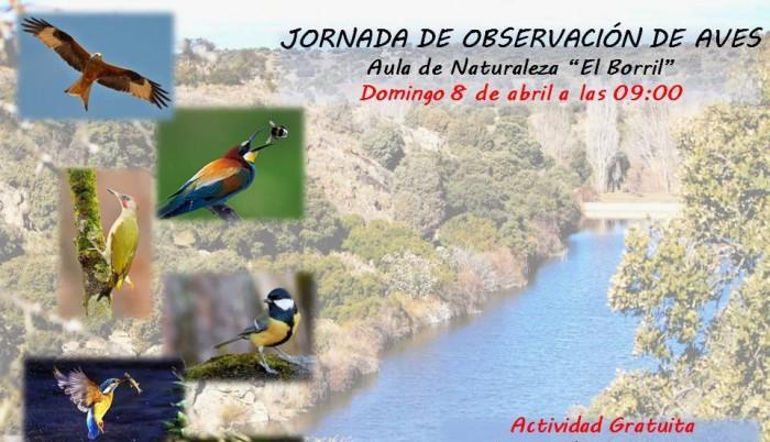 Cartel jornadas observación de aves