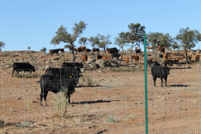 Foto archivo de la ganadería de El Borril